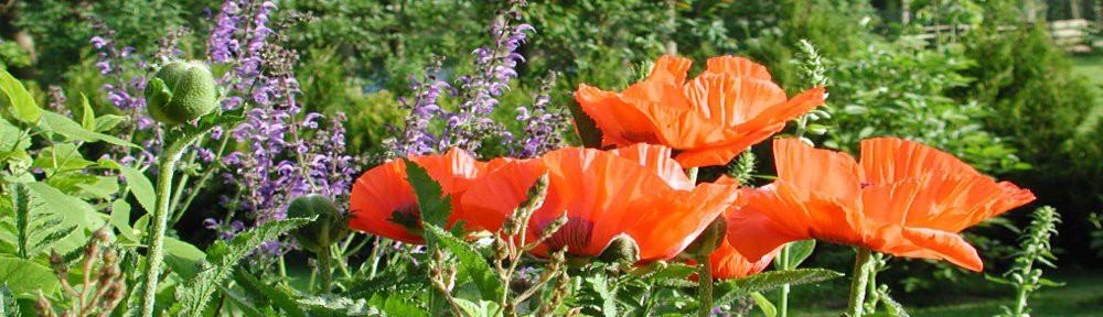 cropped-BlütenSommerWWW.jpg